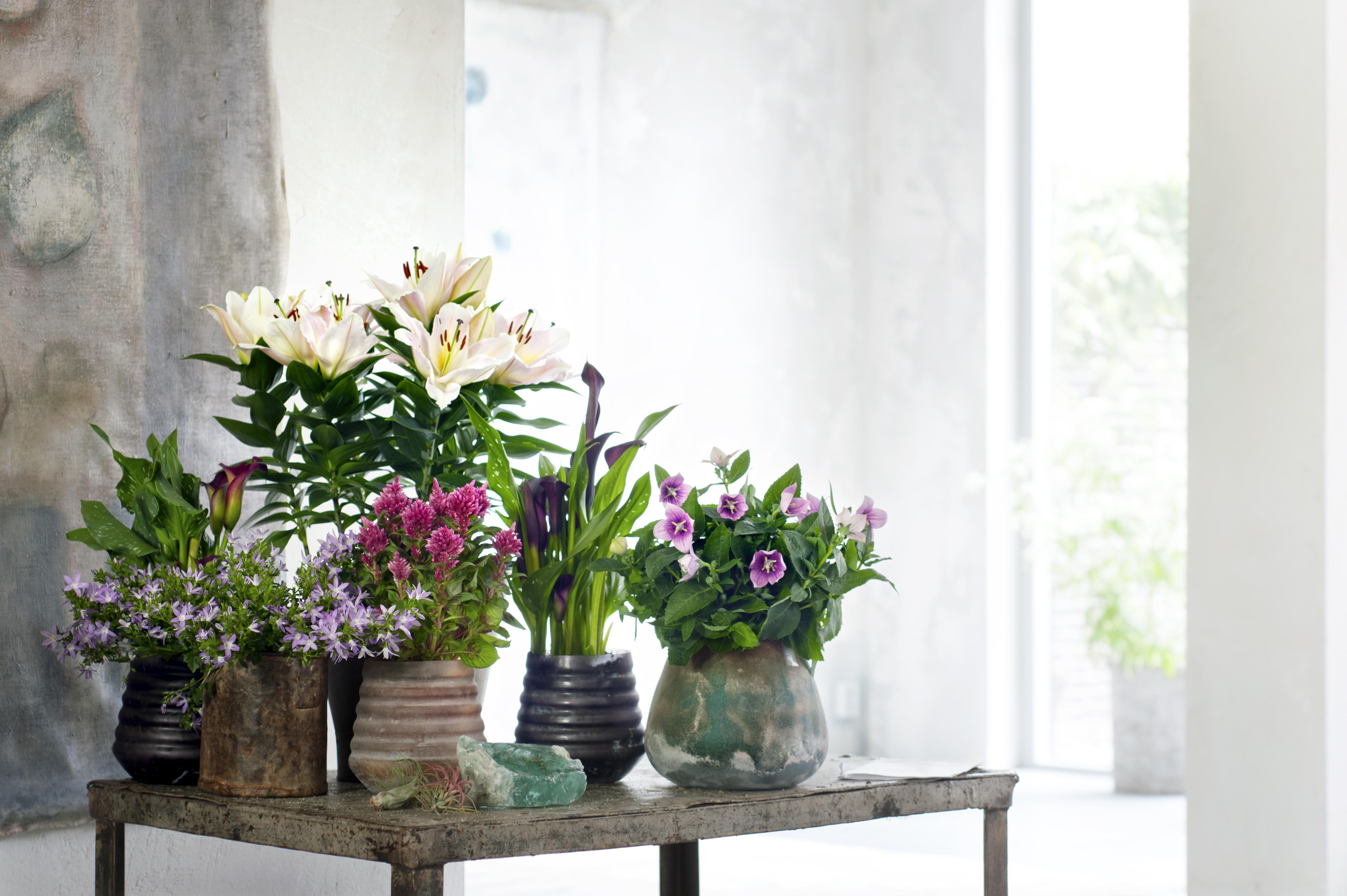 Binnenstebuiten-planten-05-2017-04 - kopie - kopie